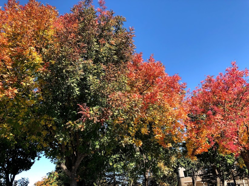 View of fall foliage during holiday tradition of nature walk